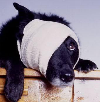 Adorable-injured-animals-15